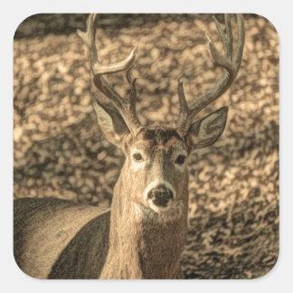 Sticker Carré cerf de Virginie d'outdoorsman de camouflage de