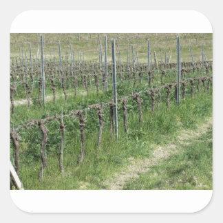 Sticker Carré Champ nu de vignoble en hiver. La Toscane, Italie