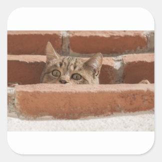 Sticker Carré Chat sauvage curieux d'attention des plots