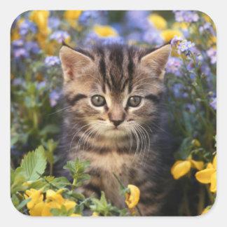 Sticker Carré Chat se reposant dans le jardin d'agrément