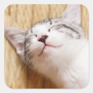 Sticker Carré Chaton de sommeil