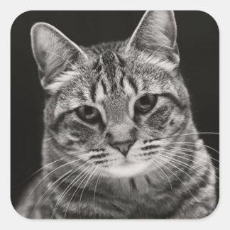 Sticker Carré Chaton tigré noir
