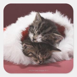 Sticker Carré Chatons endormis ensemble dans le casquette de