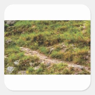 Sticker Carré chemin herbeux
