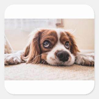 Sticker Carré Chien canin triste