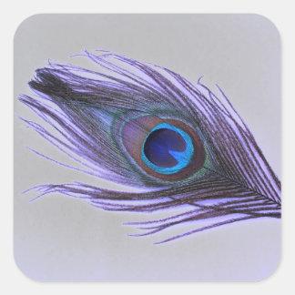 Sticker Carré Choisissez la plume pourpre de paon d'arrière -