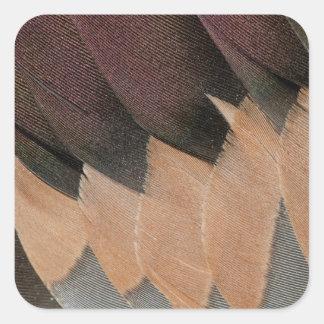 Sticker Carré Conception de plume de canard de canard pilet