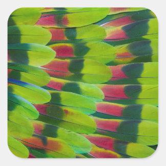 Sticker Carré Conception de plume de vert de perroquet d'Amazone
