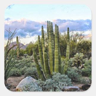 Sticker Carré Coucher du soleil de Succulent de Scottsdale