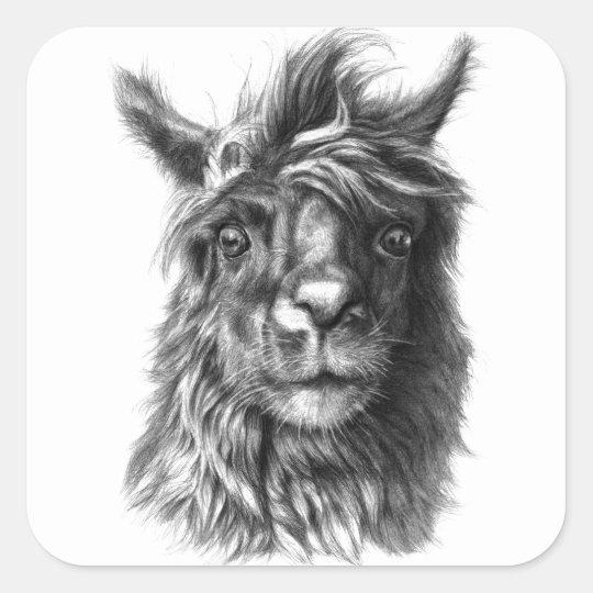 Sticker Carré Cute Llama portrait