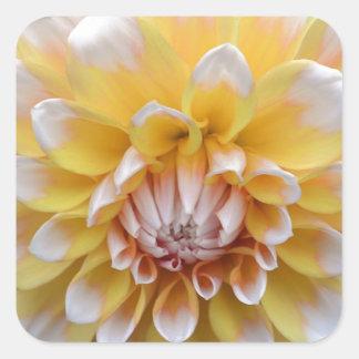 Sticker Carré Dahlia jaune et blanc