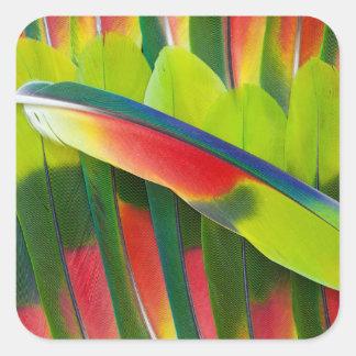 Sticker Carré D'Amazone de perroquet de plume toujours la vie
