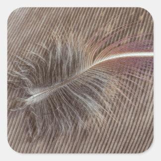 Sticker Carré De Brown de plume toujours la vie pâle