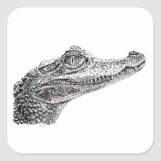 Sticker Carre Dessin D Encre De Crocodile De Bebe Zazzle Fr