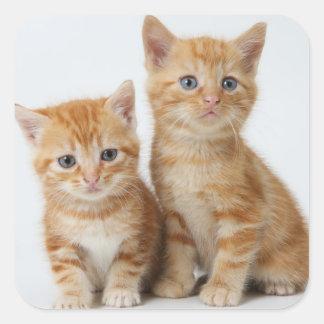 Sticker Carré Deux chatons adorables