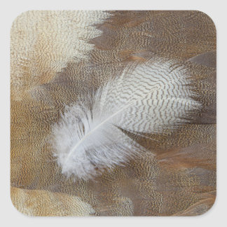 Sticker Carré D'oie de plume toujours la vie