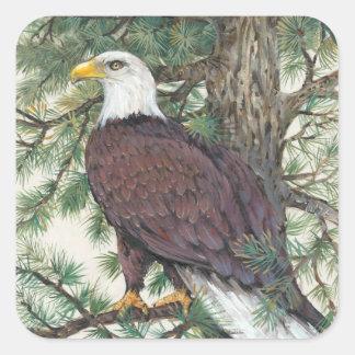 Sticker Carré Eagle chauve sur la branche