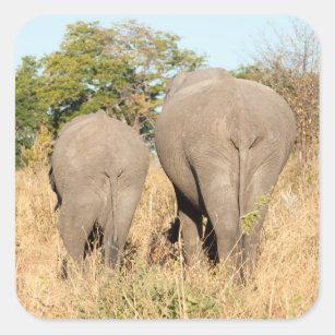 Sticker Carré Éléphants marchant loin