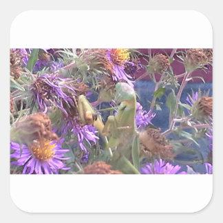 Sticker Carré Exploration de scarabées de Milkweed en masse