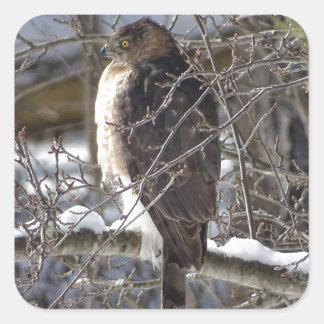 Sticker Carré faucon Large-à ailes