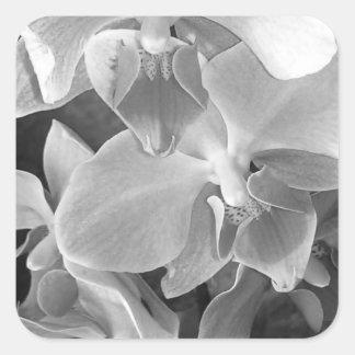 Sticker Carré Fermez-vous des fleurs d'orchidée dans la gamme de