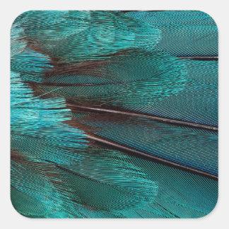 Sticker Carré Fermez-vous des plumes bleues d'aile