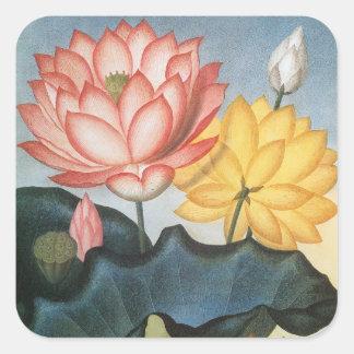 Sticker Carré Fleurs de Lotus vintages avec le feuille dans un