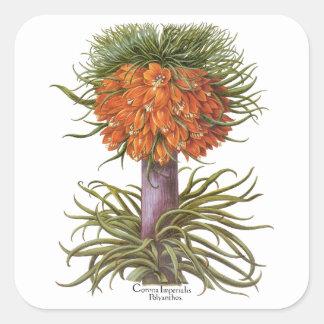 Sticker Carré Fleurs vintages de Fritillaria par Basilius Besler