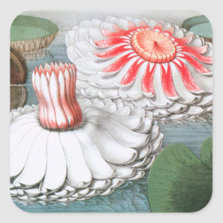 Sticker Carré Fleurs vintages de nénuphars dans un étang de