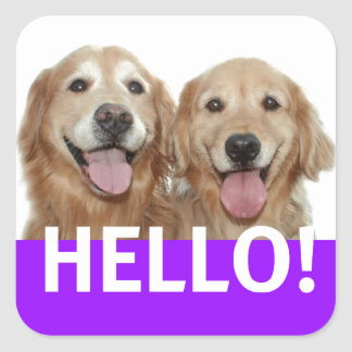 Sticker Carré Golden retriever bonjour