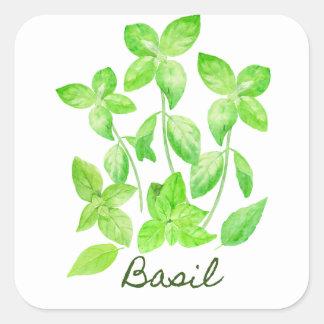 Sticker Carré Illustration de basilic d'aquarelle