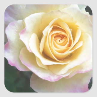 Sticker Carré Jaune et rose