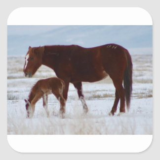 Sticker Carré Jument sauvage avec le bébé dans le désert de