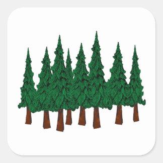 Sticker Carré La forêt à feuillage persistant