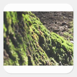 Sticker Carré La mousse verte dans le détail de nature de la