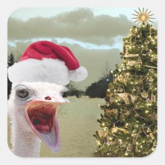 Sticker Carré L'autruche devient Excited au-dessus de Noël