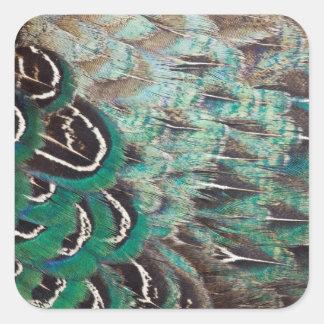 Sticker Carré Le faisan de Melanistic fait varier le pas du plan