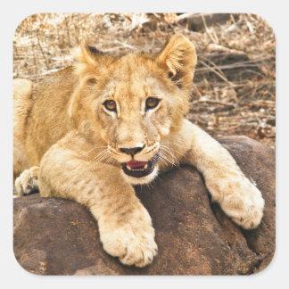 Sticker Carré Le tigre CUB prend le reniflard sur une roche