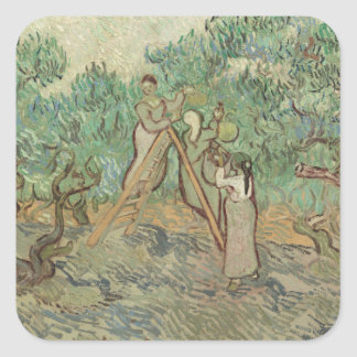 Sticker Carré Le verger olive