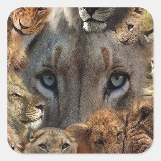 Sticker Carré Lions heureux