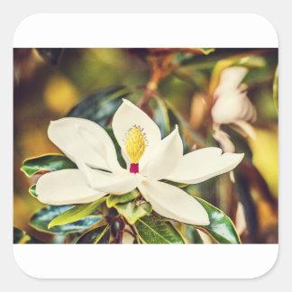 Sticker Carré Magnolia magnifique du Mississippi