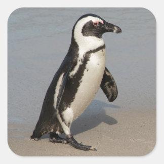 Sticker Carré Marche africaine de pingouin