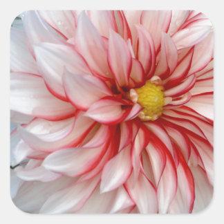 Sticker Carré Menthe poivrée florale