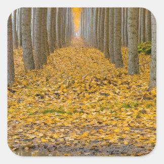 Sticker Carré _MG_3099aReflection à la ferme d'arbre de peuplier