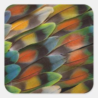 Sticker Carré Motif de plume de perruche
