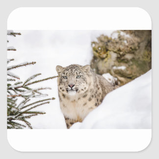 Sticker Carré neige-léopard