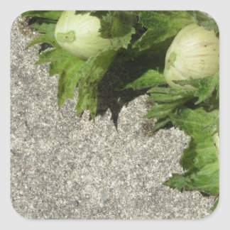 Sticker Carré Noisettes vertes fraîches sur le plancher