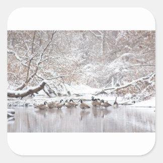 Sticker Carré Oies dans la neige
