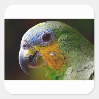 Sticker Carré Oiseau exotique de vert d'oiseau d'animaux