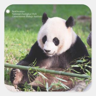 Sticker Carré Panda géant Mei Xiang